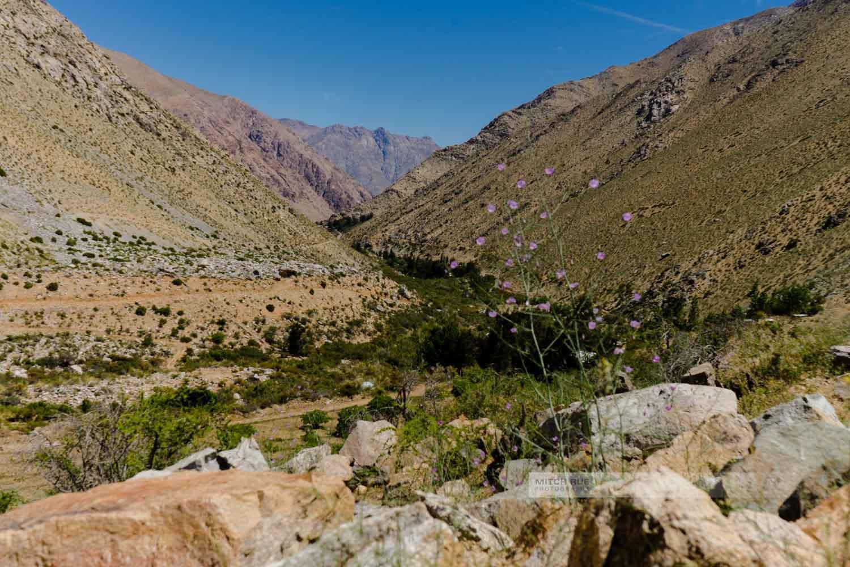 Valle de Elqui (das Elquital) mit einer Blume im Vordergrund, die den Blick auf das karge und doch grüne Tal weist